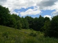 Лес Царевка